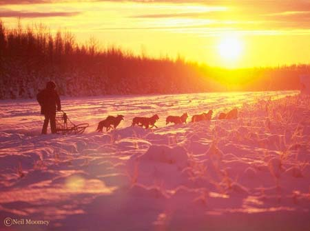 dog_sledding1_rf.jpg
